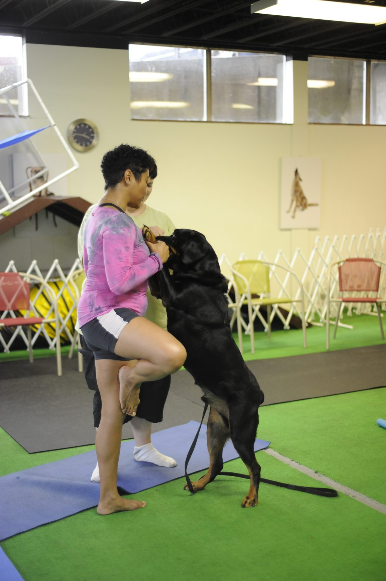 Yoga with your dog, a relaxing play session with your best friend