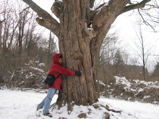 Hug a tree to just be