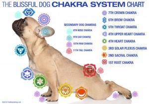 TheBlissfulDogChakraSystem650x